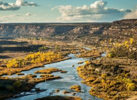 New Mexico surrogacy